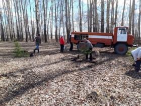 На территории сельского поселения прошла республиканская акция «Посади дерево – подари жизнь!»